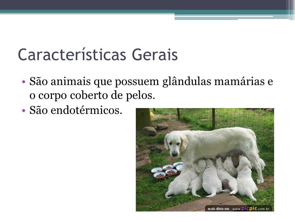 Características Gerais São animais que possuem glândulas mamárias e o corpo coberto de pelos. São endotérmicos.