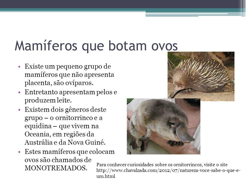 Mamíferos que botam ovos Existe um pequeno grupo de mamíferos que não apresenta placenta, são ovíparos. Entretanto apresentam pelos e produzem leite.