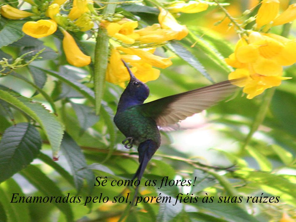 Sê como os pássaros! Come, bebe, canta e vôa!