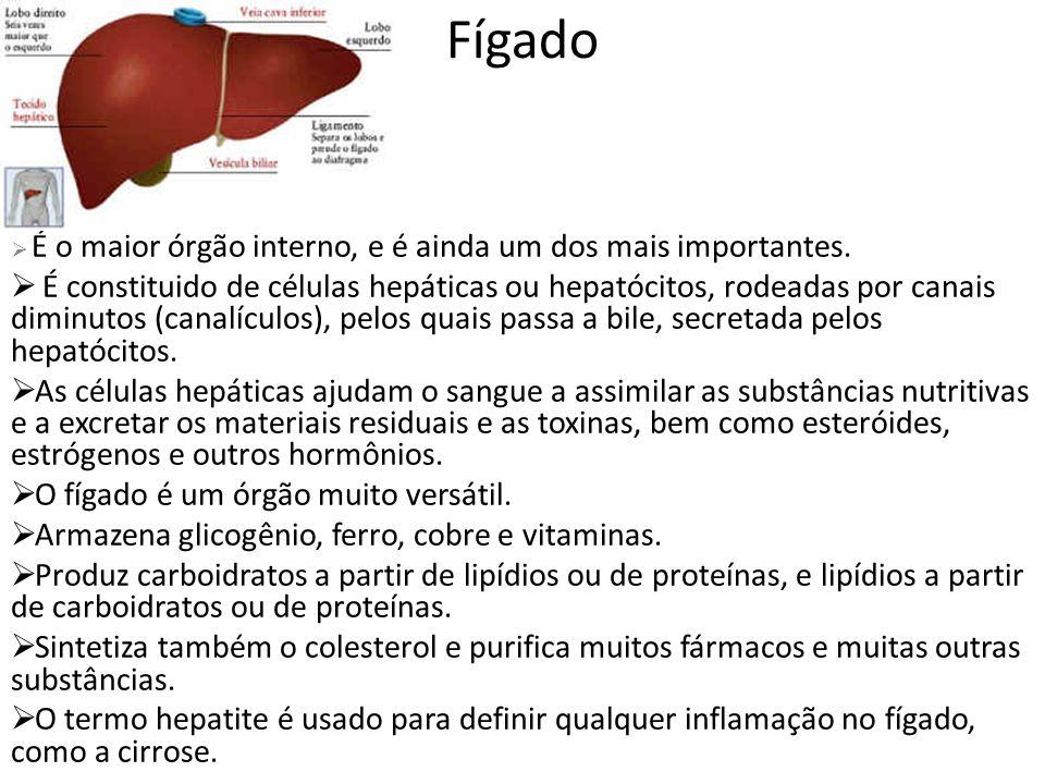 Fígado É o maior órgão interno, e é ainda um dos mais importantes. É constituido de células hepáticas ou hepatócitos, rodeadas por canais diminutos (c