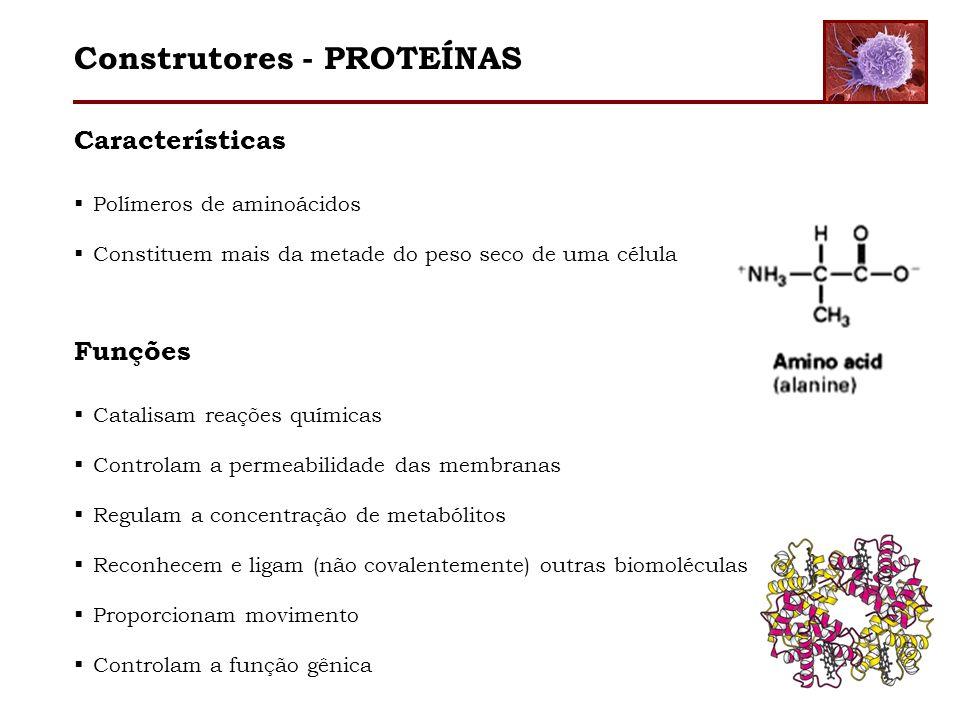 Características Polímeros de aminoácidos Constituem mais da metade do peso seco de uma célula Funções Catalisam reações químicas Controlam a permeabil