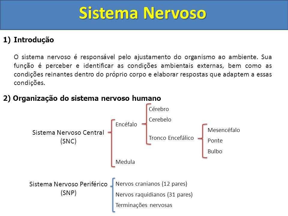 Sistema Nervoso 1)Introdução O sistema nervoso é responsável pelo ajustamento do organismo ao ambiente. Sua função é perceber e identificar as condiçõ