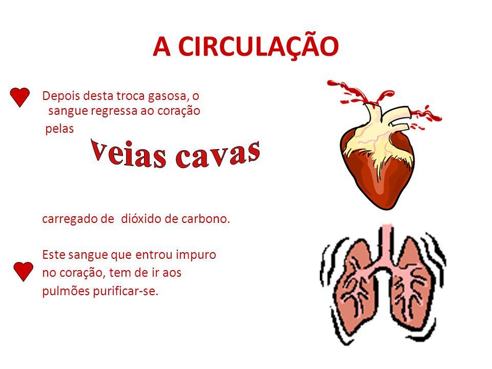 A CIRCULAÇÃO Depois desta troca gasosa, o sangue regressa ao coração pelas carregado de dióxido de carbono. Este sangue que entrou impuro no coração,