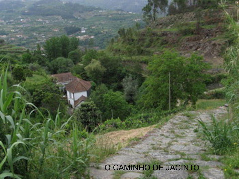 O CAMINHO DE JACINTO