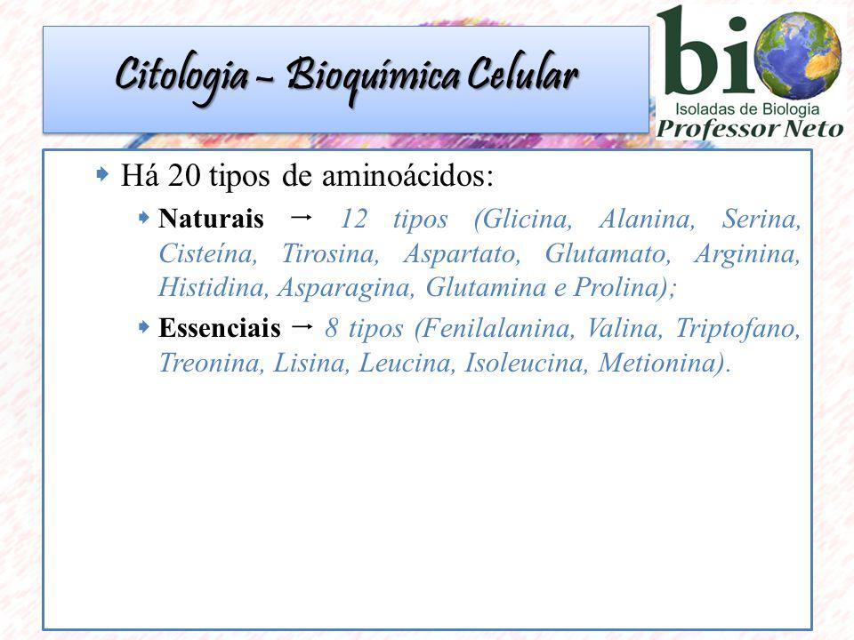 Há 20 tipos de aminoácidos: Naturais 12 tipos (Glicina, Alanina, Serina, Cisteína, Tirosina, Aspartato, Glutamato, Arginina, Histidina, Asparagina, Glutamina e Prolina); Essenciais 8 tipos (Fenilalanina, Valina, Triptofano, Treonina, Lisina, Leucina, Isoleucina, Metionina).