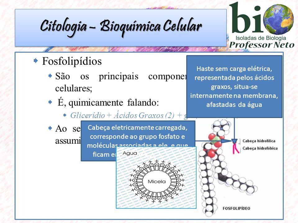 Fosfolipídios São os principais componentes das membranas celulares; É, quimicamente falando: Glicerídio + Ácidos Graxos (2) + grupamento fosfato Ao serem colocadas em contato com a água podem assumir o formato de uma esfera micela Cabeça eletricamente carregada, corresponde ao grupo fosfato e moléculas associadas a ele, e que ficam em contato com a água Haste sem carga elétrica, representada pelos ácidos graxos, situa-se internamente na membrana, afastadas da água Citologia – Bioquímica Celular