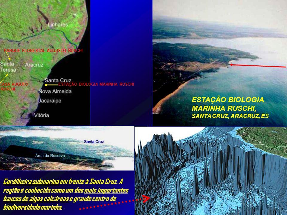 ESTAÇÃO BIOLOGIA MARINHA RUSCHI, SANTA CRUZ, ARACRUZ, ES Cordilheira submarina em frente à Santa Cruz.