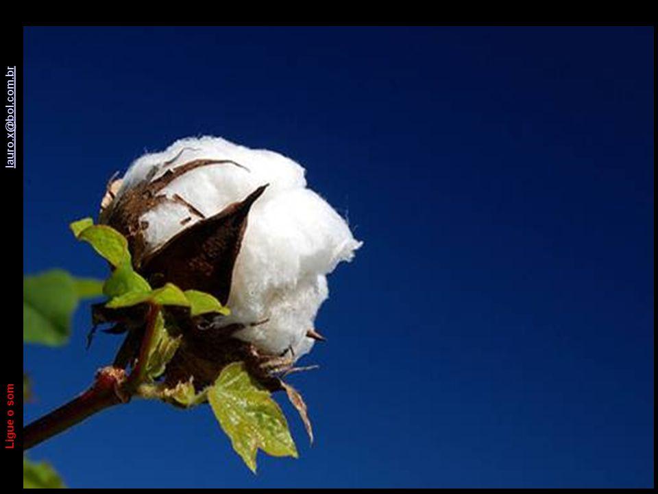 A Lenda do Algodão Ligue o som lauro.x@bol.com.br lauro.x@bol.com.br E este foi meu floquinho diário de algodão para você.