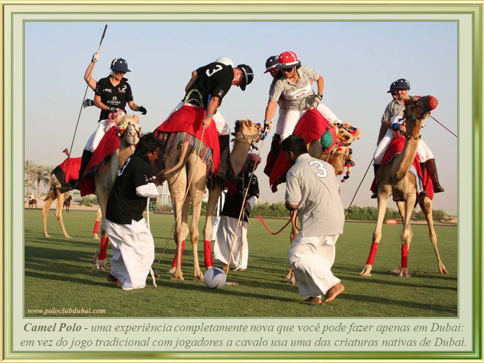 Corrida de camelos - é um esporte de tradição profundamente enraizada que tem suas origens na cultura do deserto do Norte de África e do Oriente Médio