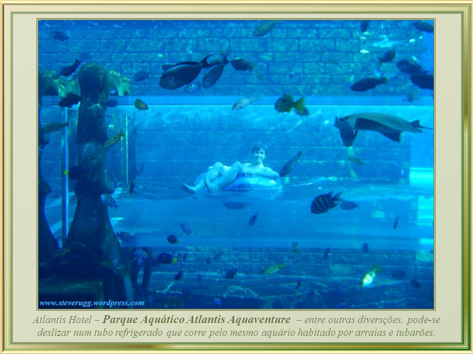 The Atlantis oferece suítes com parede de vidro e vista para o aquário instalado num reservatório gigante de 11.000.000 litros de água, ao ar-livre, com 65.000 peixes e outras criaturas do mar.