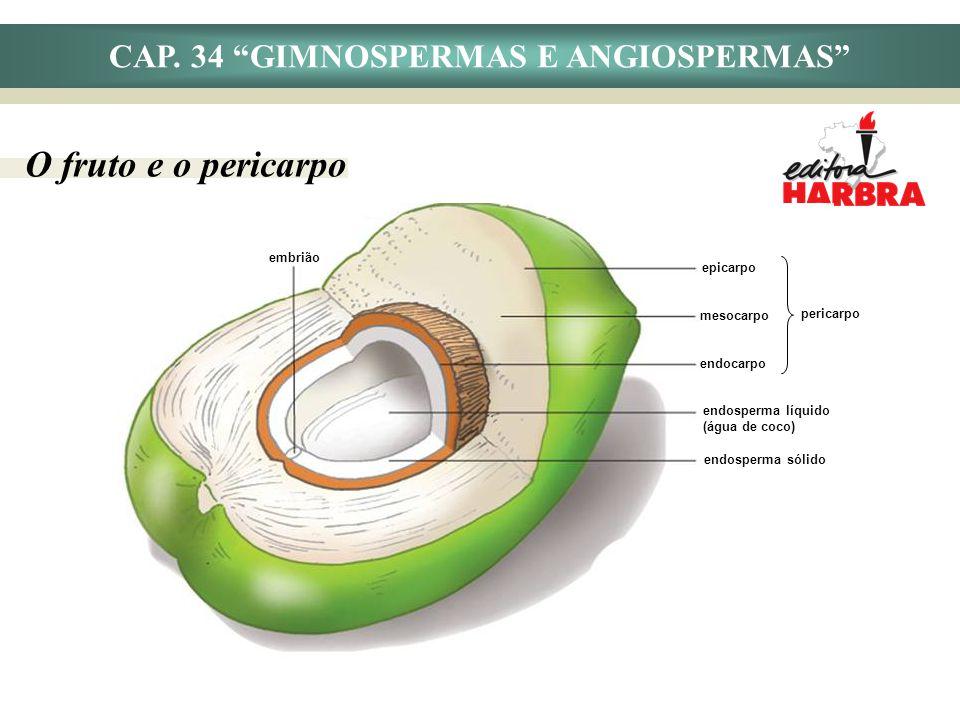 CAP. 34 GIMNOSPERMAS E ANGIOSPERMAS O fruto e o pericarpo embrião epicarpo mesocarpo endocarpo pericarpo endosperma líquido (água de coco) endosperma