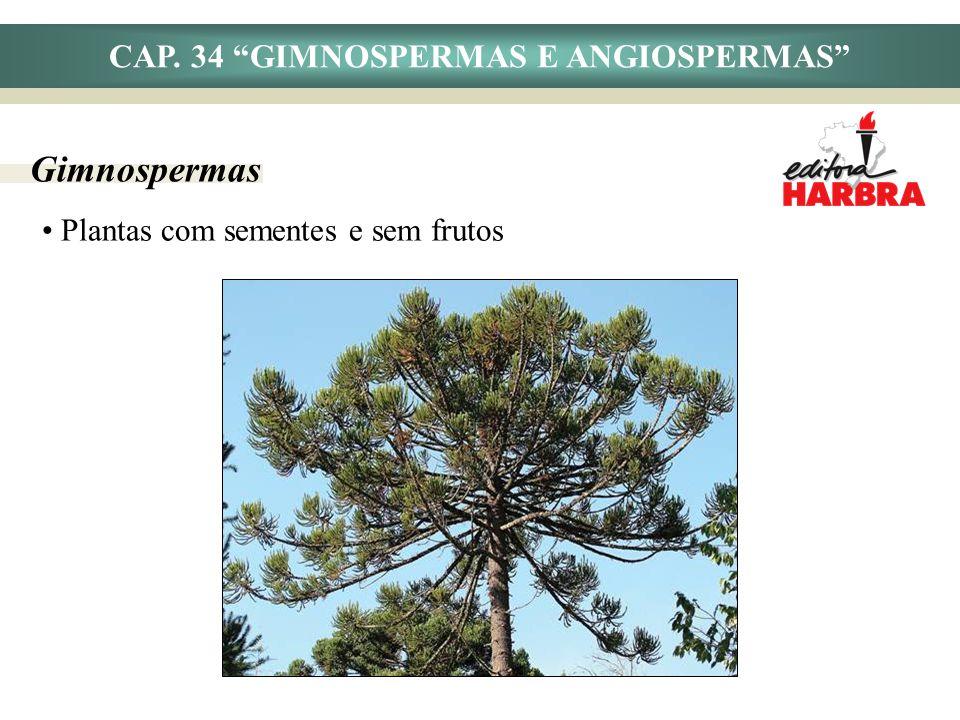 CAP. 34 GIMNOSPERMAS E ANGIOSPERMAS Gimnospermas Plantas com sementes e sem frutos
