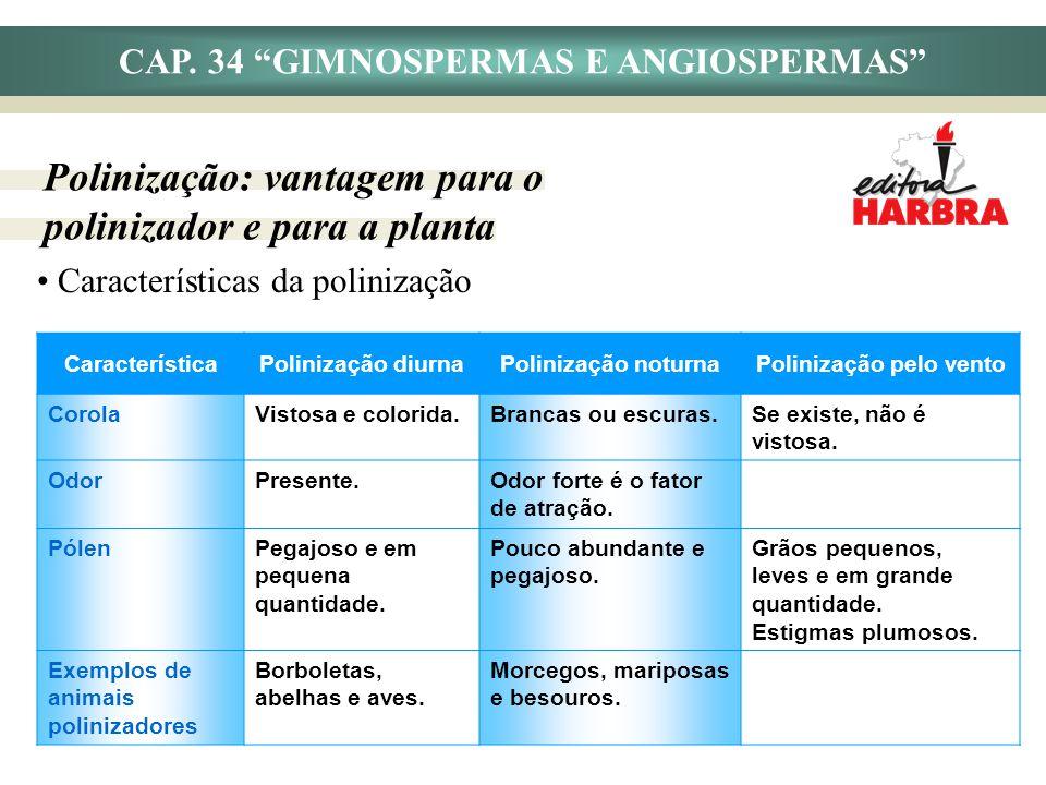 CAP. 34 GIMNOSPERMAS E ANGIOSPERMAS Polinização: vantagem para o polinizador e para a planta Características da polinização CaracterísticaPolinização