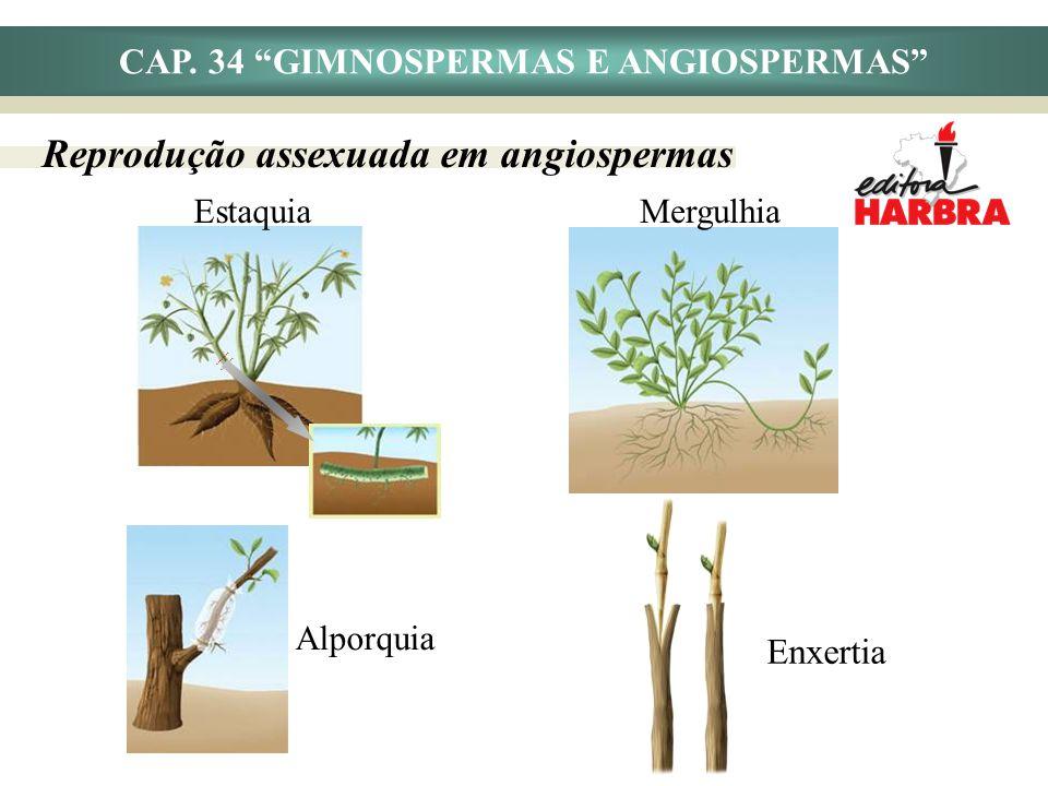 Estaquia CAP. 34 GIMNOSPERMAS E ANGIOSPERMAS Reprodução assexuada em angiospermas Alporquia Mergulhia Enxertia