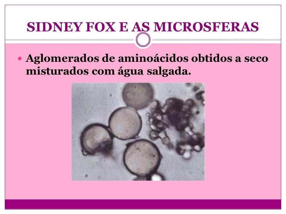 SIDNEY FOX E AS MICROSFERAS Aglomerados de aminoácidos obtidos a seco misturados com água salgada.