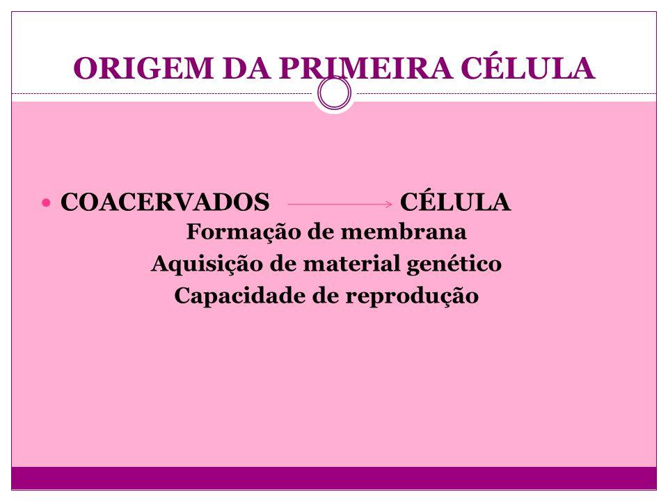 ORIGEM DA PRIMEIRA CÉLULA COACERVADOS CÉLULA Formação de membrana Aquisição de material genético Capacidade de reprodução