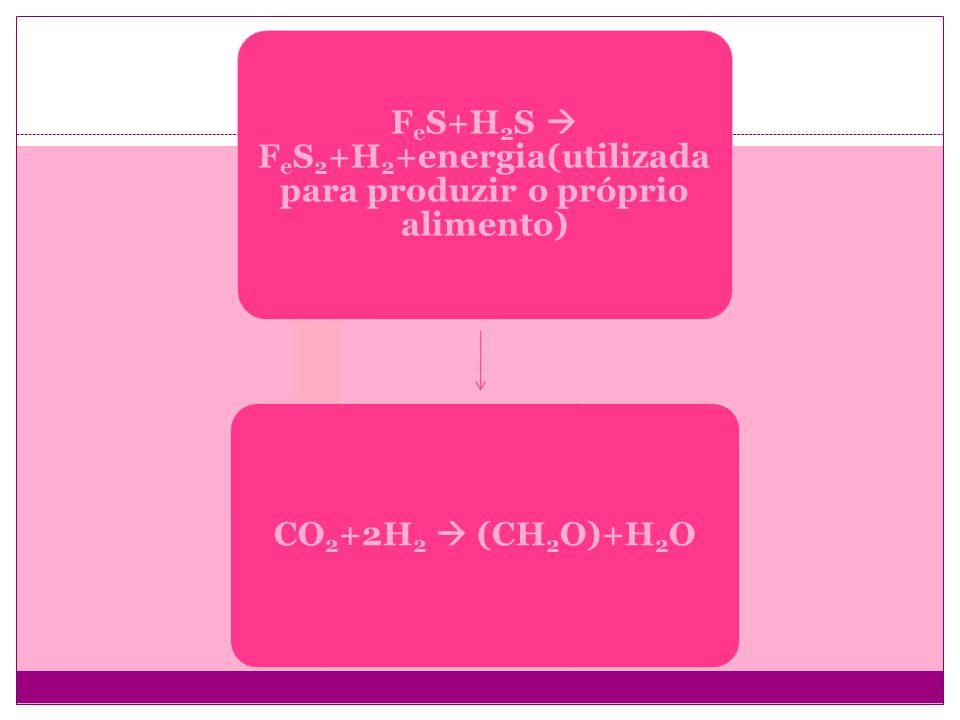 FeS+H2S FeS2+H 2 +energia(utilizad a para produzir o próprio alimento) CO2+2H2 (CH2O)+H2O