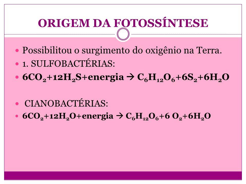 ORIGEM DA FOTOSSÍNTESE Possibilitou o surgimento do oxigênio na Terra. 1. SULFOBACTÉRIAS: 6CO 2 +12H 2 S+energia C 6 H 12 O 6 +6S 2 +6H 2 O CIANOBACTÉ