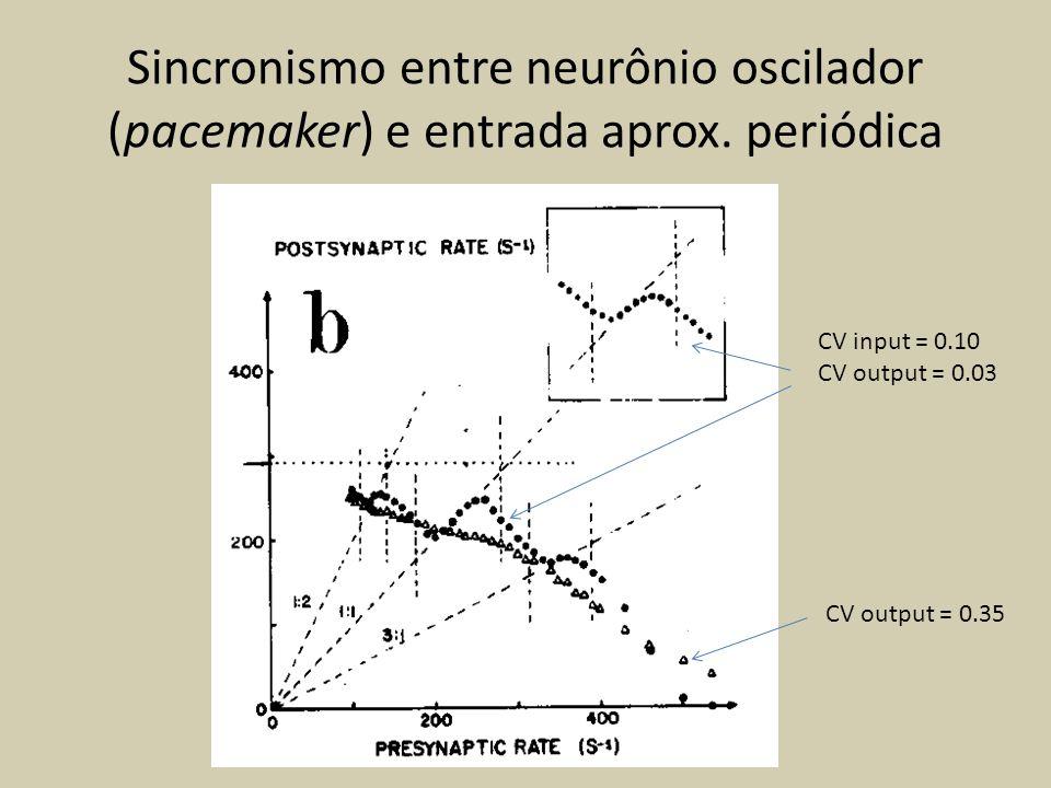 Sincronismo entre neurônio oscilador (pacemaker) e entrada aprox. periódica CV input = 0.10 CV output = 0.03 CV output = 0.35