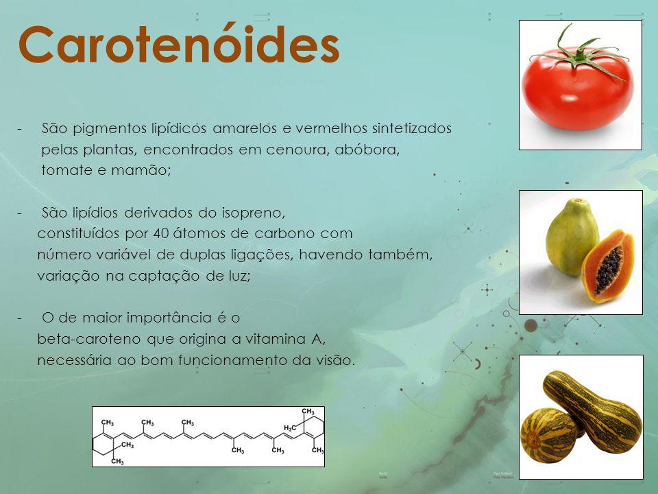 Carotenóides -São pigmentos lipídicos amarelos e vermelhos sintetizados pelas plantas, encontrados em cenoura, abóbora, tomate e mamão; -São lipídios