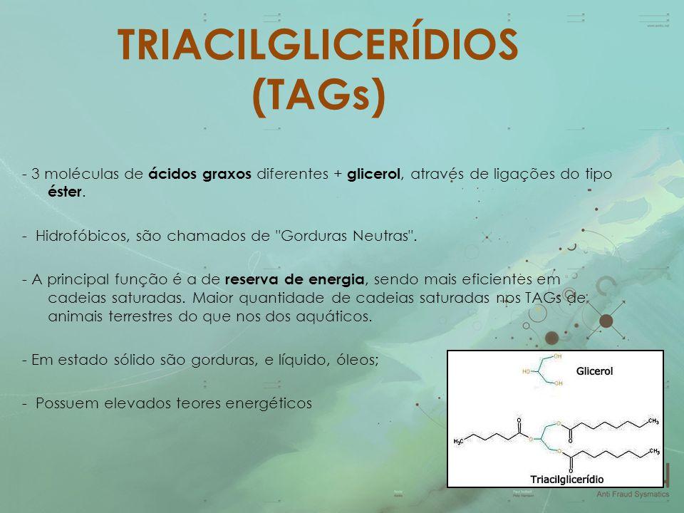 TRIACILGLICERÍDIOS (TAGs) - 3 moléculas de ácidos graxos diferentes + glicerol, através de ligações do tipo éster. - Hidrofóbicos, são chamados de