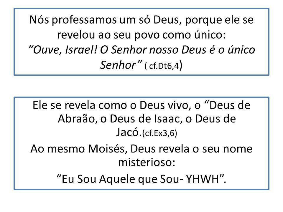 A Igreja é a lavoura ou campo de Deus.Nesse campo cresce a oliveira antiga, cuja raiz santa foram os Patriarcas.