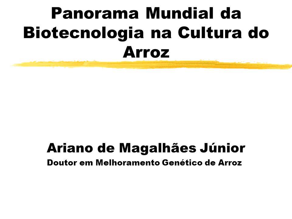 Panorama Mundial da Biotecnologia na Cultura do Arroz Ariano de Magalhães Júnior Doutor em Melhoramento Genético de Arroz