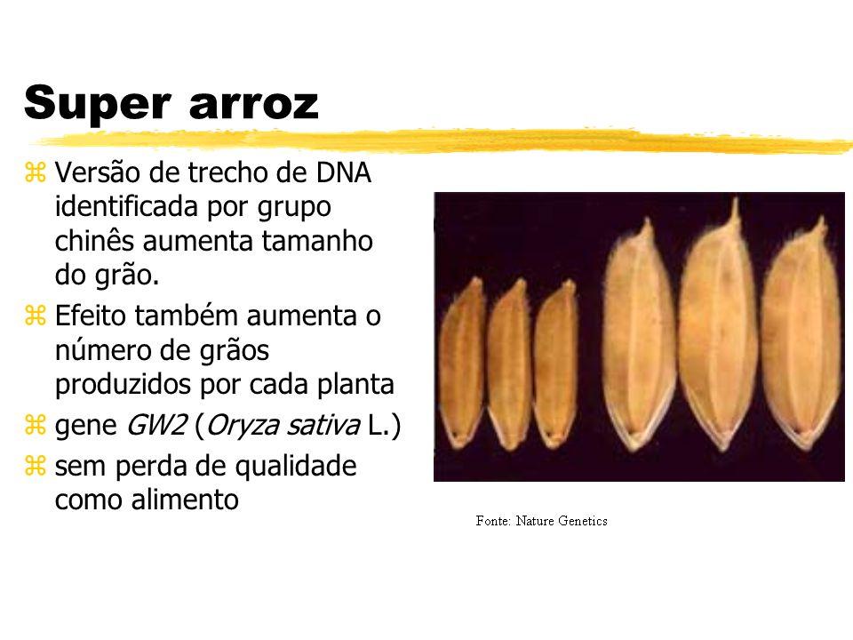 Super arroz zVersão de trecho de DNA identificada por grupo chinês aumenta tamanho do grão.