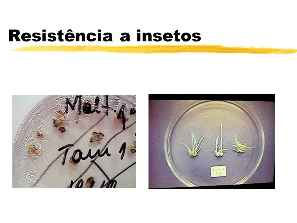 Resistência a insetos