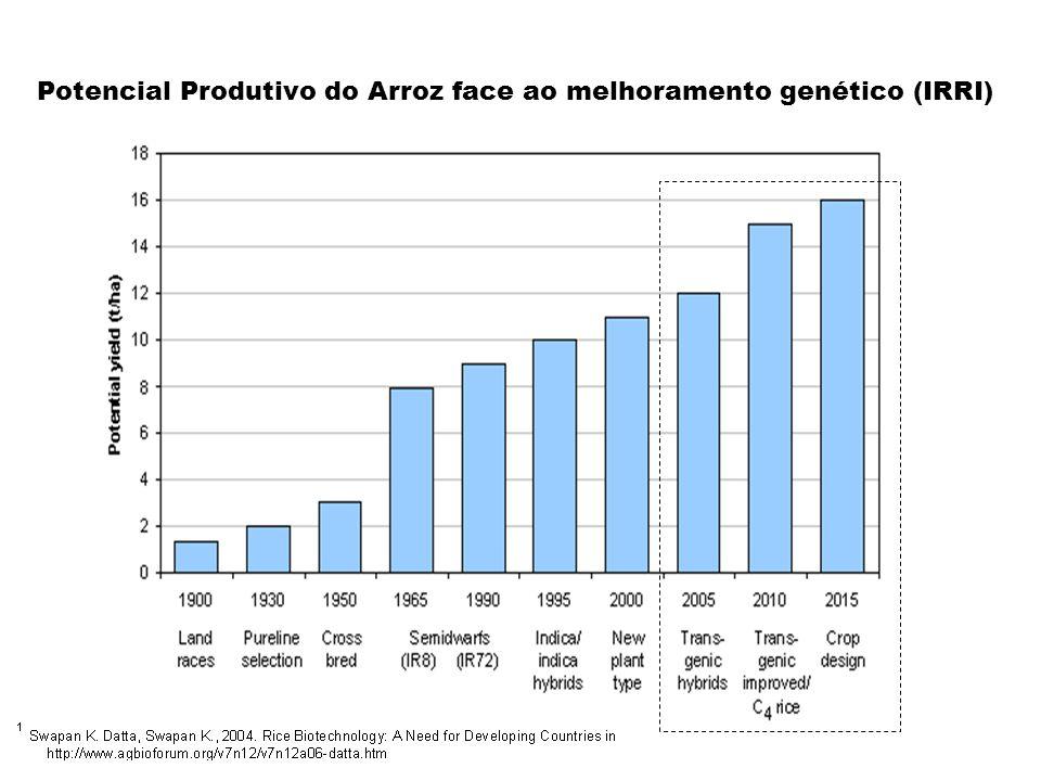 Produtividade zaumento nas taxas fotossintética z40 - 50 mgCO 2 dm -2 h -1 zmilho gene PEPC z30% de aumento zmacho-esterelidade zFonte: Ku et al (1999) IRRI