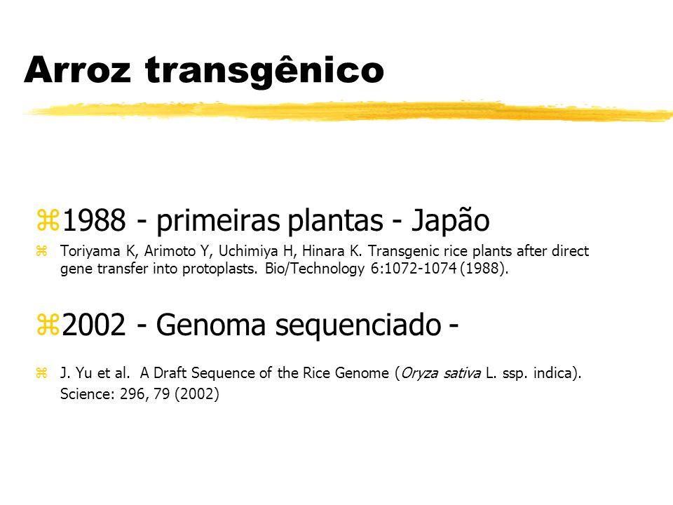 Arroz Transgênico zResistência a herbicidas zResistência a insetos zResistência a doenças zResistência a estresses zProdutividade zQualidade nutricional