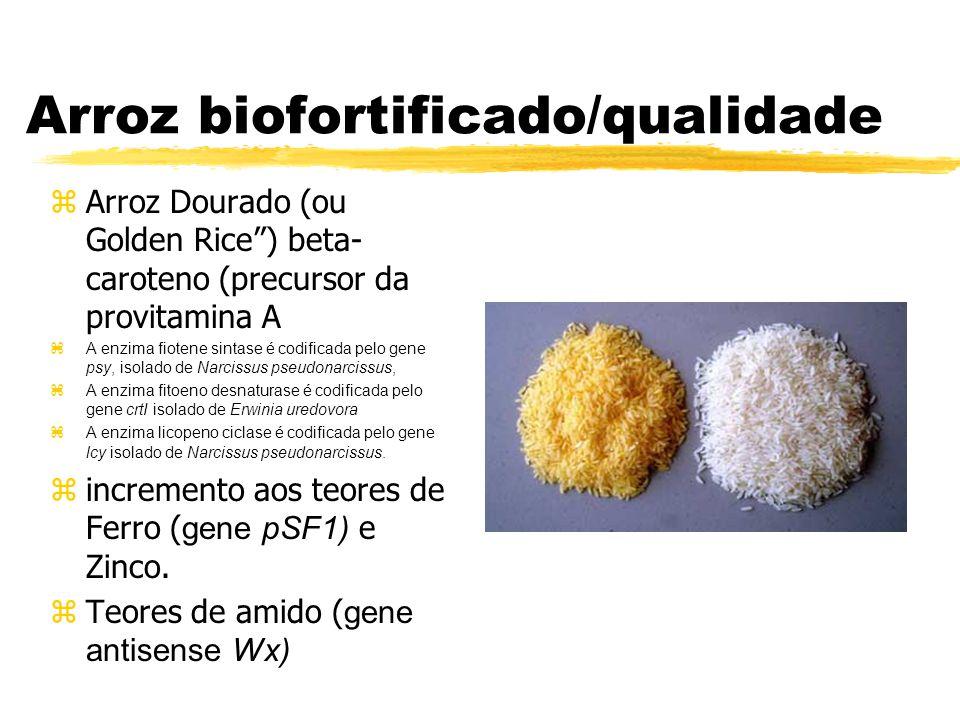 Resistência a estresses gene mtlD - acúmulo de manitol ajuste osmótico superexpressão da arginina descarboxilase (adc), ornitina descarboxilase (odc) - acúmulo de poliaminas pequenos compostos nitrogenados (putrescinas) genes otsA e otsB - trealose - açúcar não redutor