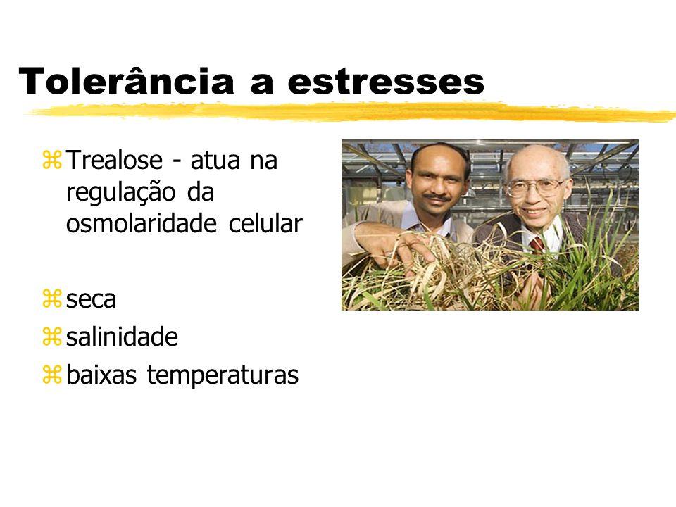 Tolerância a estresses zTrealose - atua na regulação da osmolaridade celular zseca zsalinidade zbaixas temperaturas