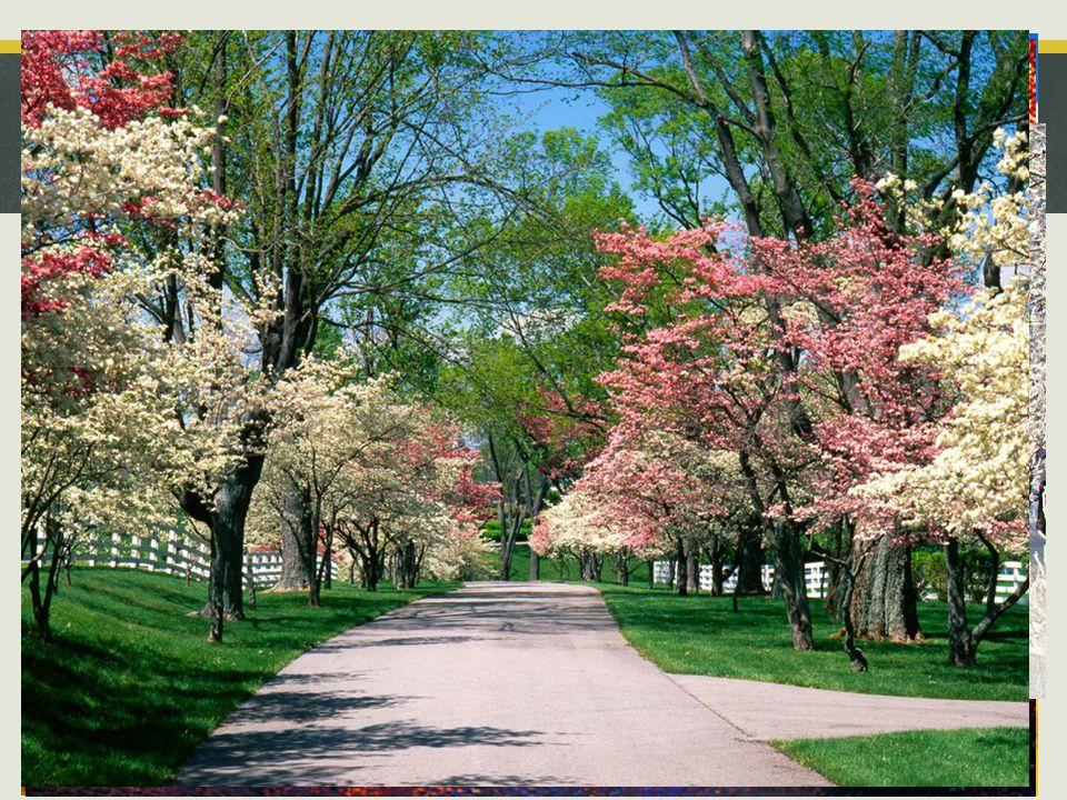 Quais são os tempos da natureza? ____________________ 8 Verão Outono Inverno Primavera