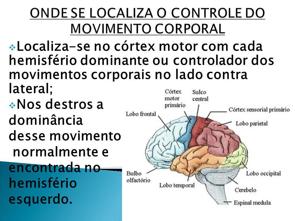 Localiza-se no córtex motor com cada hemisfério dominante ou controlador dos movimentos corporais no lado contra lateral; Nos destros a dominância des