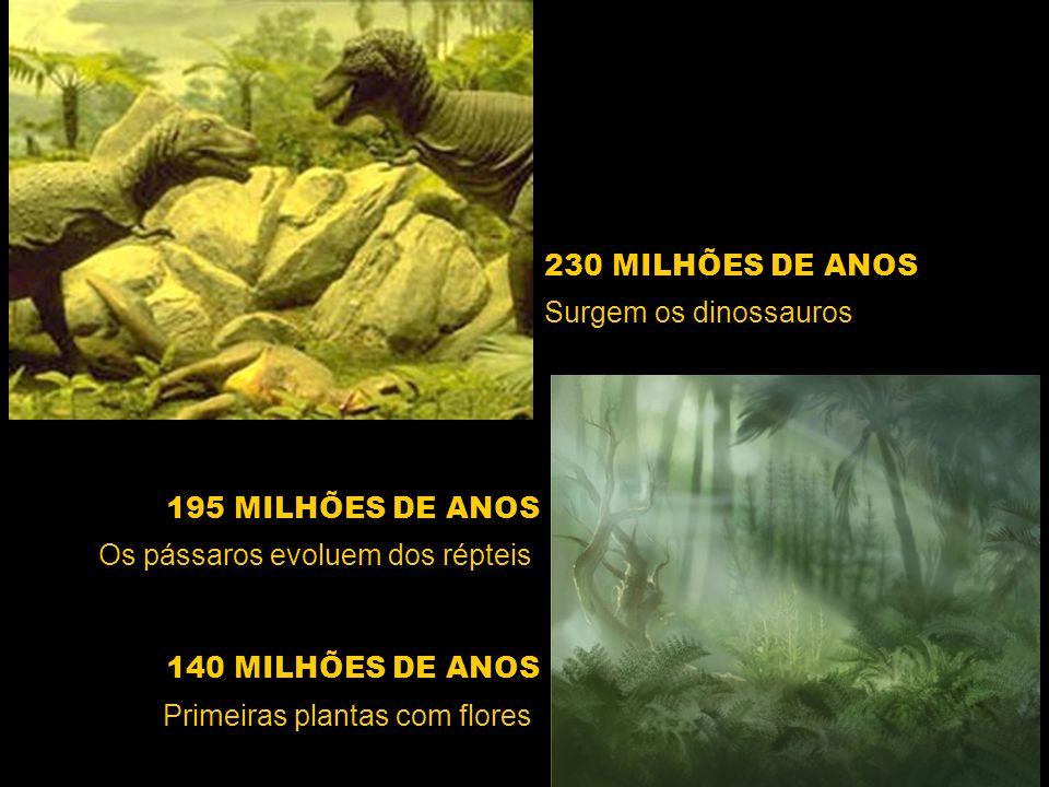 230 MILHÕES DE ANOS Primeiras plantas com flores Surgem os dinossauros 195 MILHÕES DE ANOS Os pássaros evoluem dos répteis 140 MILHÕES DE ANOS