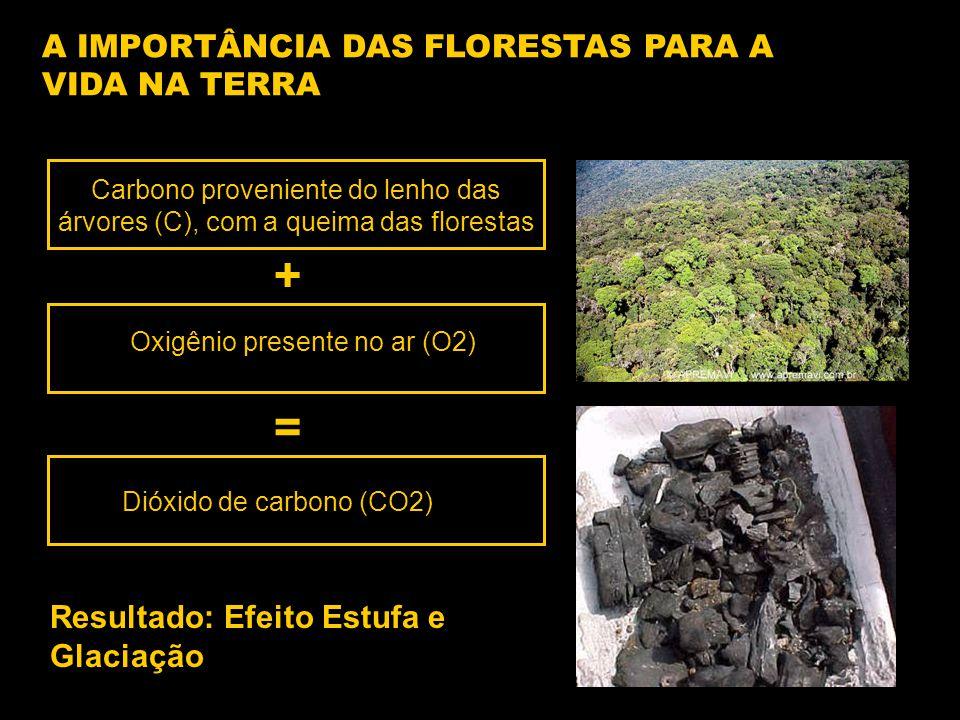 A IMPORTÂNCIA DAS FLORESTAS PARA A VIDA NA TERRA Carbono proveniente do lenho das árvores (C), com a queima das florestas Oxigênio presente no ar (O2) Dióxido de carbono (CO2) + = Resultado: Efeito Estufa e Glaciação