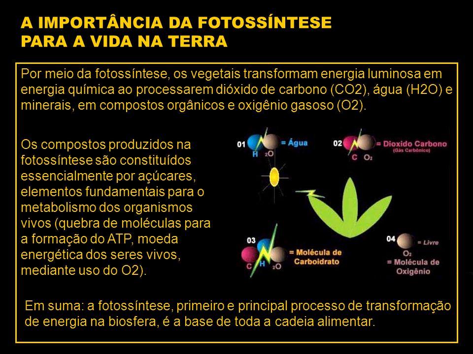 Por meio da fotossíntese, os vegetais transformam energia luminosa em energia química ao processarem dióxido de carbono (CO2), água (H2O) e minerais, em compostos orgânicos e oxigênio gasoso (O2).