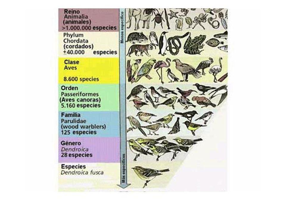 DOENÇAS E AGENTES CAUSADORES Vírus DOENÇAPARASITA CONTÁGIOCICLO DE VIDAPROFILAXIA HIDROFOBIA (Raiva) Mordida de animais(cães, gatos, morcegos).