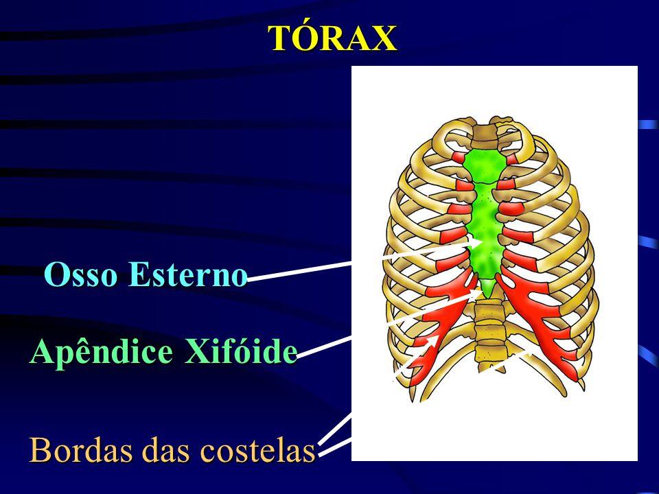 TÓRAX Bordas das costelas Apêndice Xifóide Osso Esterno