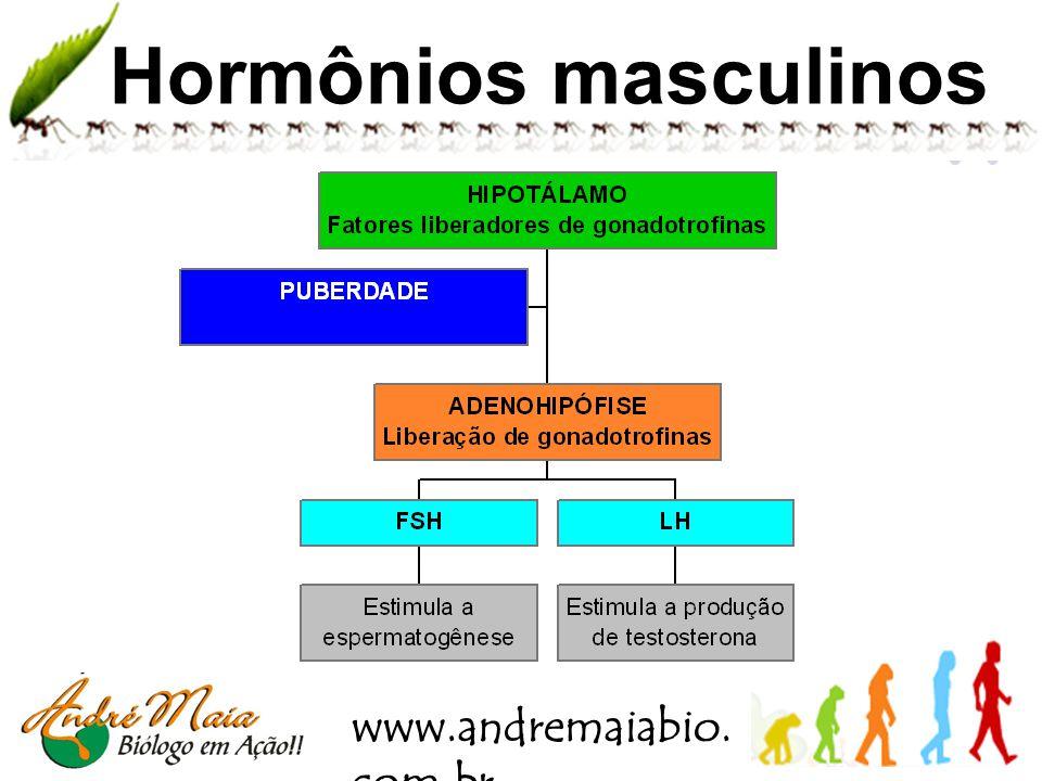 www.andremaiabio. com.br Testículo