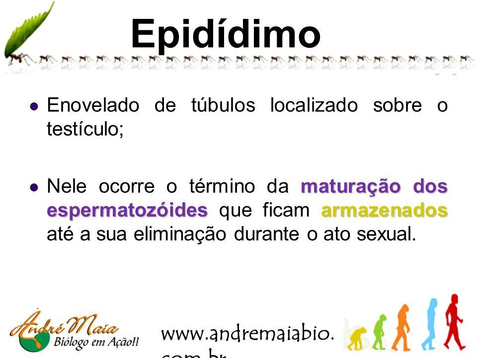 www.andremaiabio. com.br Hormônios masculinos