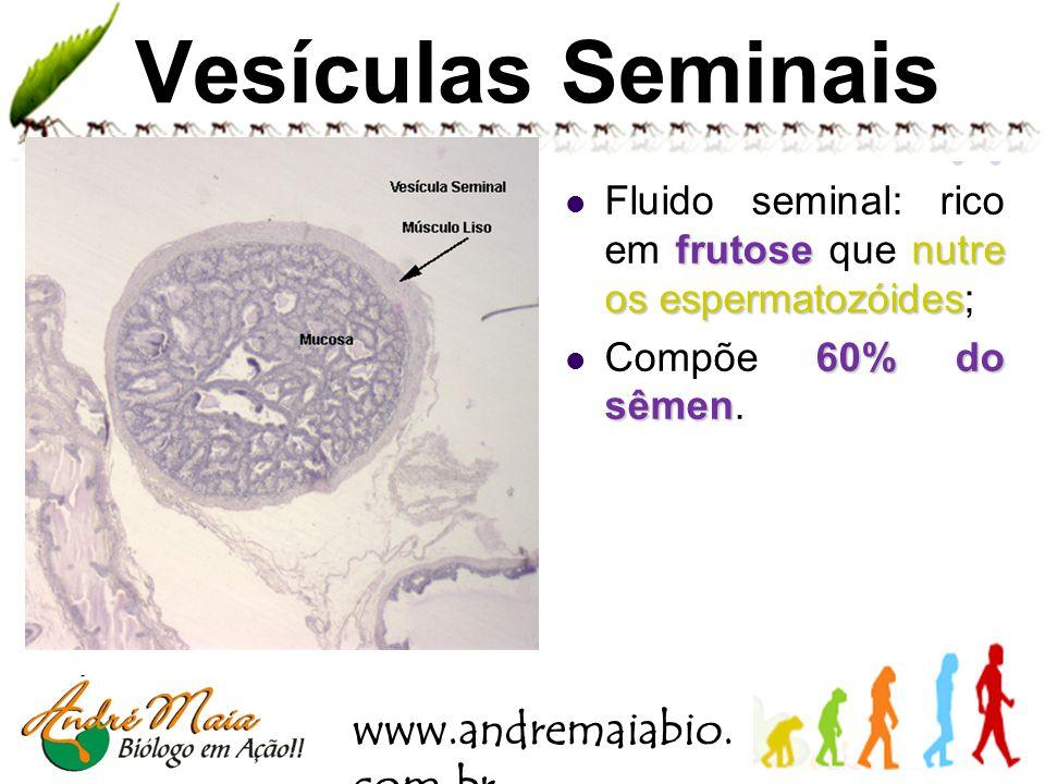 www.andremaiabio. com.br Uretra Duto comum aos sistemas reprodutor e urinário do homem.