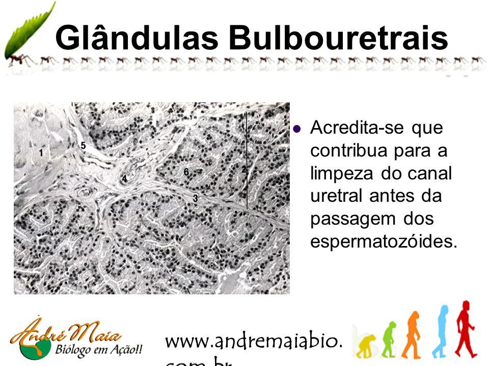 www.andremaiabio. com.br Próstata