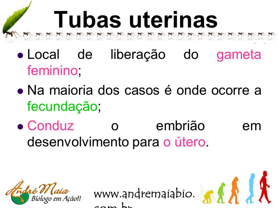 www.andremaiabio. com.br Útero Tubas uterinas Ovário Ligamento dos ovários Útero Colo do útero Vagina Endométrio