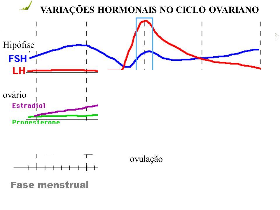 www.andremaiabio. com.br CICLO MENSTRUAL