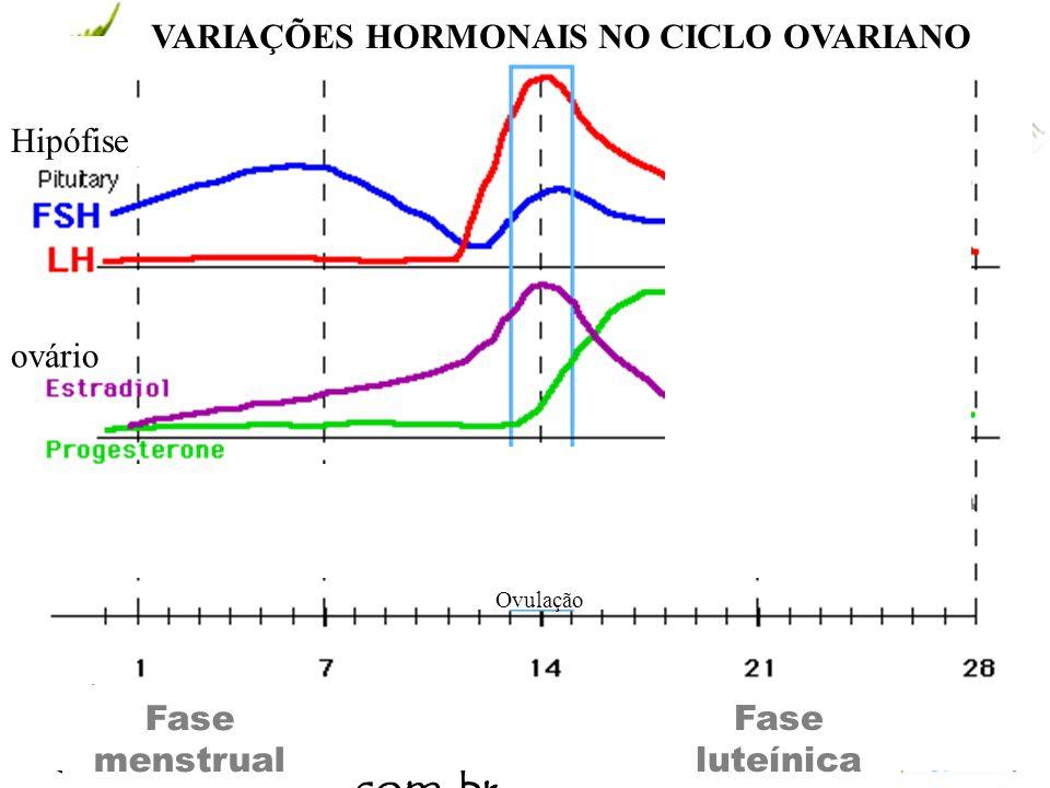 www.andremaiabio. com.br Fase folicular VARIAÇÕES HORMONAIS NO CICLO OVARIANO Hipófi se ovário Ovulação Fase menstrual