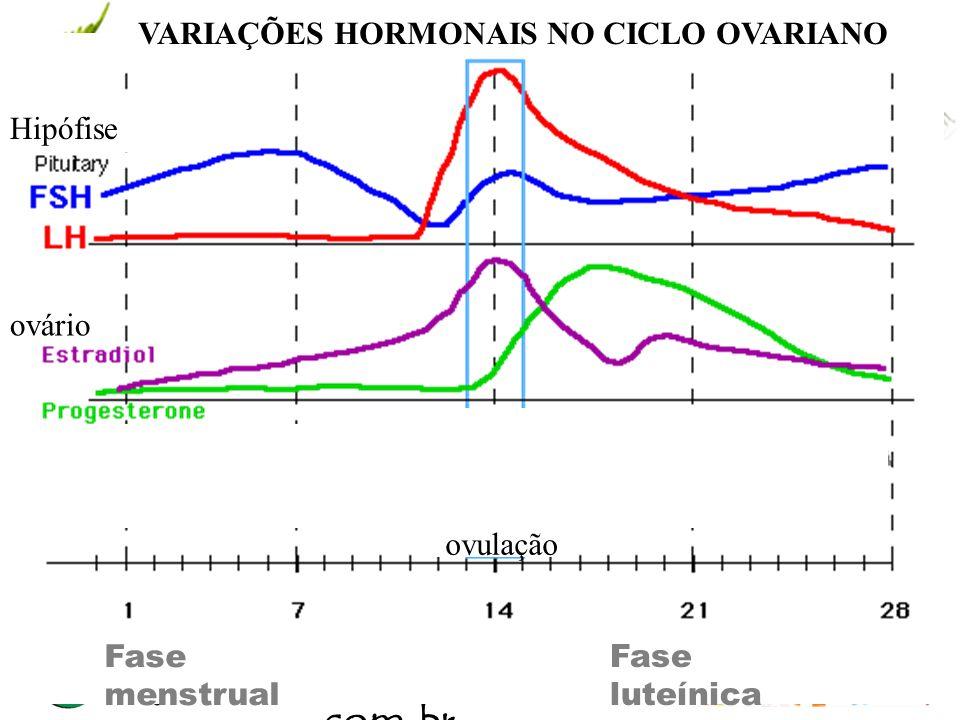 www.andremaiabio. com.br Fase luteínica VARIAÇÕES HORMONAIS NO CICLO OVARIANO Hipófise ovário Ovulação Fase menstrual
