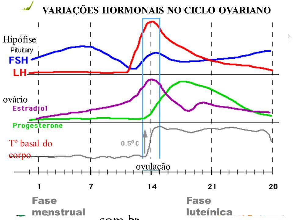www.andremaiabio. com.br Fase luteínica VARIAÇÕES HORMONAIS NO CICLO OVARIANO Fase menstrual Tº basal do corpo ovulação Hipófise ovário