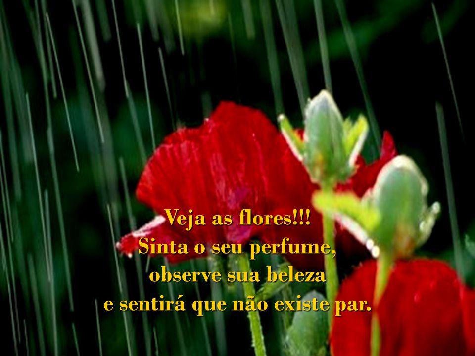 Veja as flores!!! Sinta o seu perfume, observe sua beleza e sentirá que não existe par.